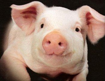 свиная нога запеченая фото