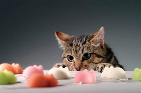 Если ваша кошка заболела может ли домашняя кошка заболеть