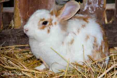Уход за кроликом кролики это не только ценный мех